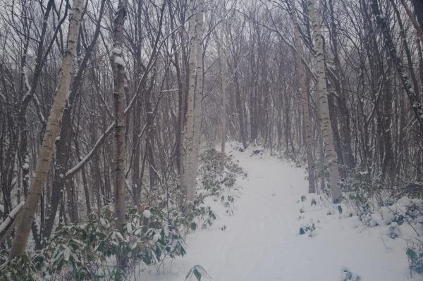 白樺並木をスノーハイク!