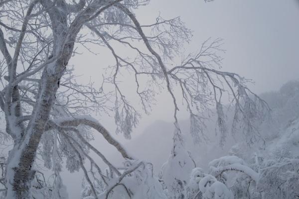 疲れも吹き飛ぶ美しい樹氷たち。