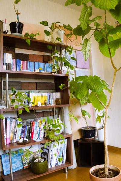 文庫本や雑誌、観葉植物など壁際へおいてシャットアウト。