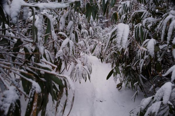 笹をよけるときにカメラに雪がかぶってイライラ。
