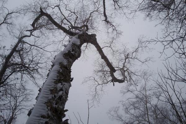 ニョキニョキッと伸びる木々