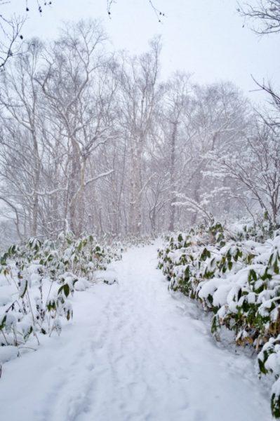 サラサラの雪の上を進む。