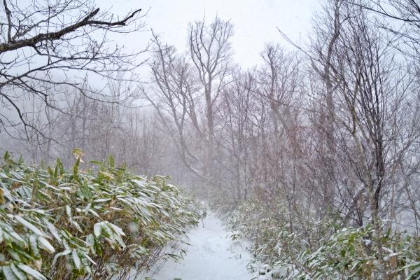 ちょっと吹雪になってきた。