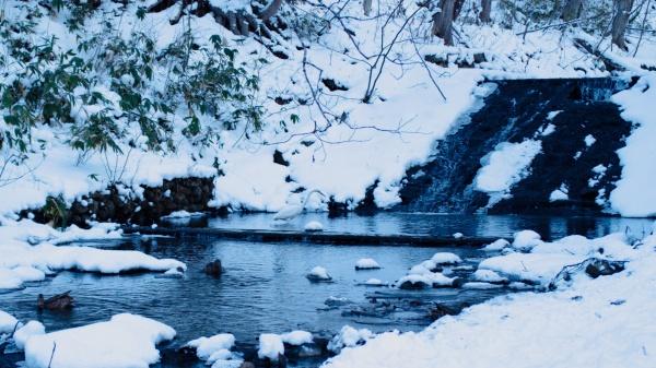 滝の周りはエサが豊富なようです。