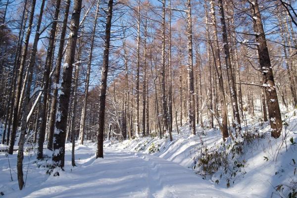 気持ちのいい林道。