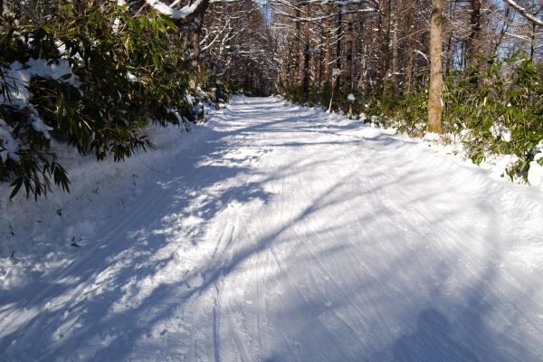 スキー跡が残る林道