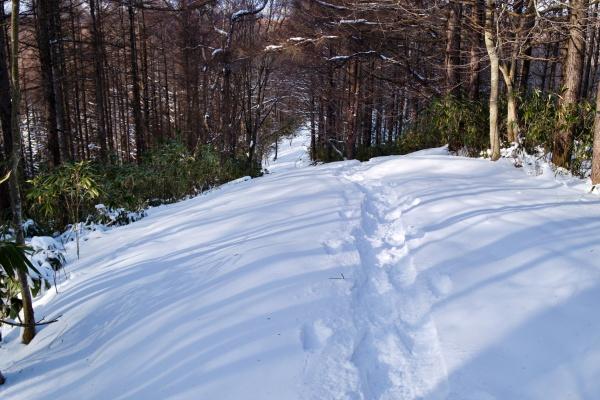 起伏のある登山道。
