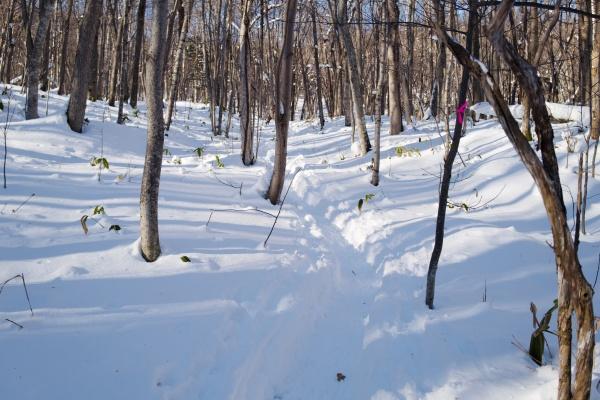登りやすい林道。