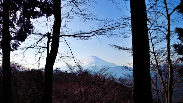 林の中から富士山。