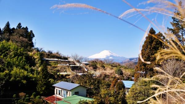 向原越しの富士山