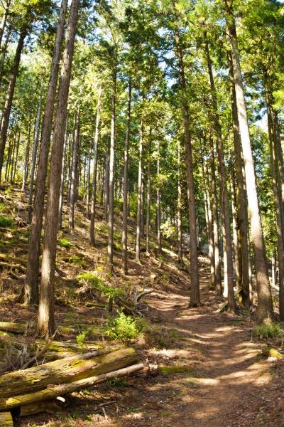 あたたかみのある高松山登山道