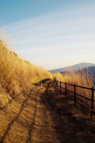 縦ショットも映える大野山。