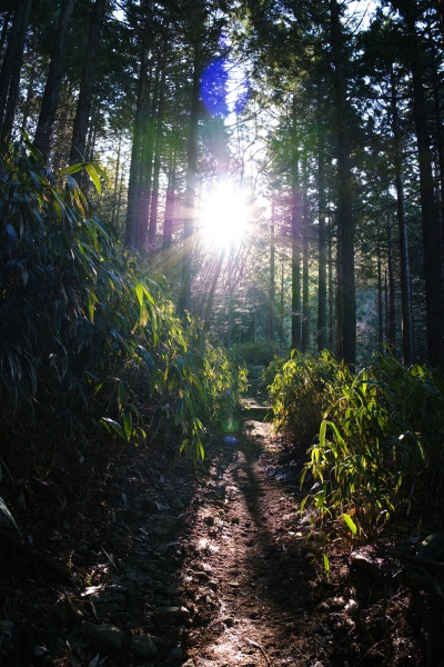 ピカッと太陽。木漏れ日がイイネ。