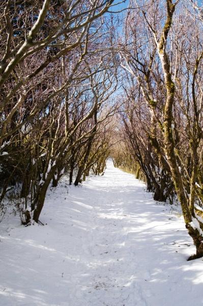 めげずに雪道を進む。