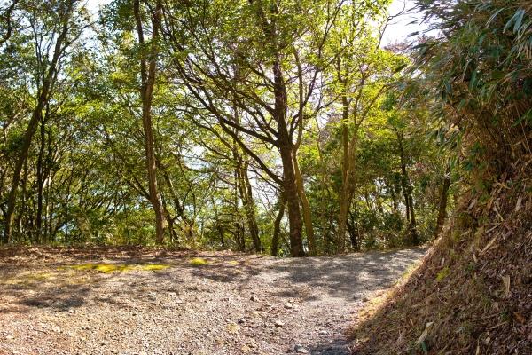 歩きやすいハイキングコース。