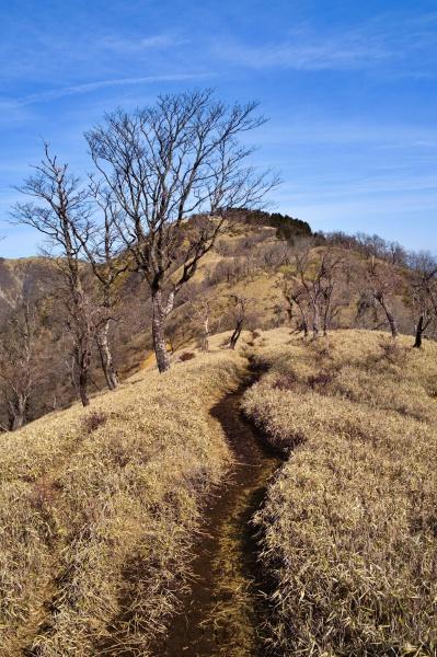 丹沢山へ続く稜線。
