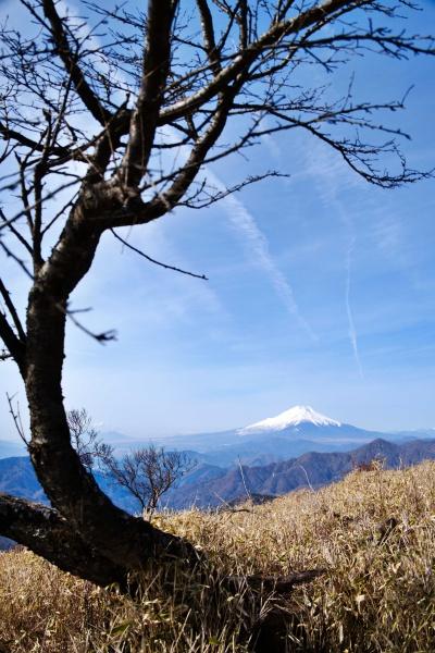 絵になるなぁ、富士山。
