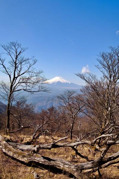 お気に入りの山になった檜洞丸。新緑の季節に期待なぁ。
