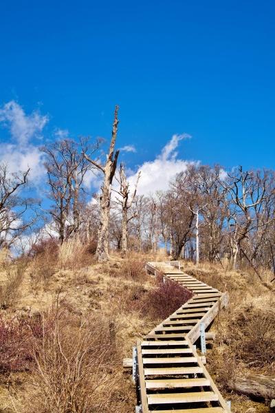 天国への階段のよう。