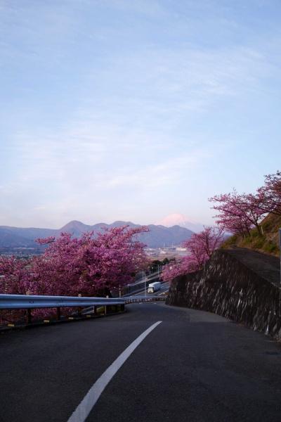 西平畑公園への道は登り坂が続く。写真中央には富士山!