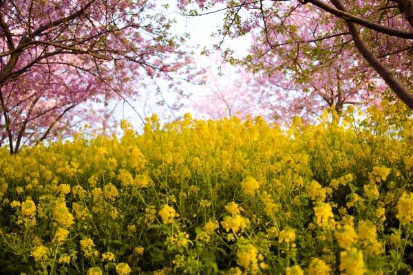 生き生きと咲いてますね。