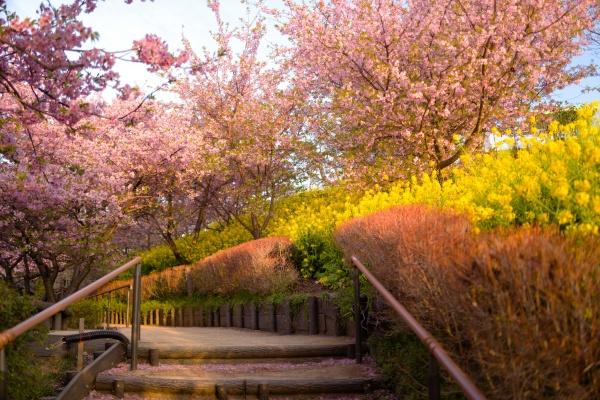 歩きやすい自然散策路