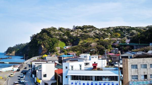 岡田港の避難センター屋上から撮影。伊豆大島桜がきれいです。※手前にはまのかあちゃんめし。