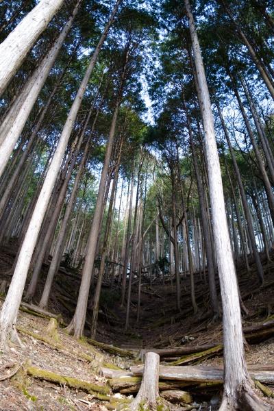 綺麗に整備された林。
