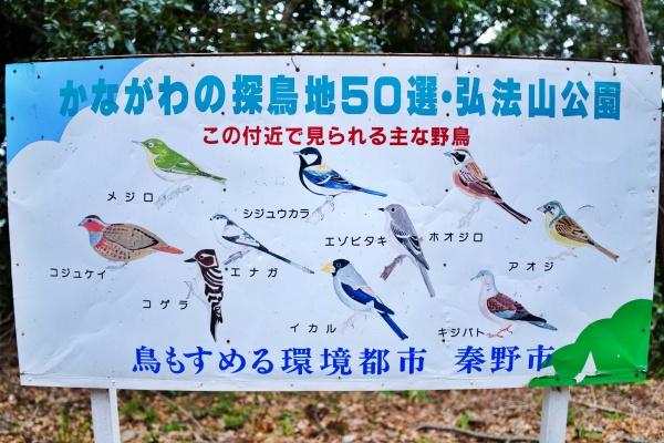 野鳥が多くみられるらしい。