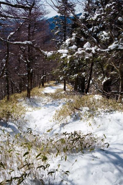 フカフカの雪の上を下山