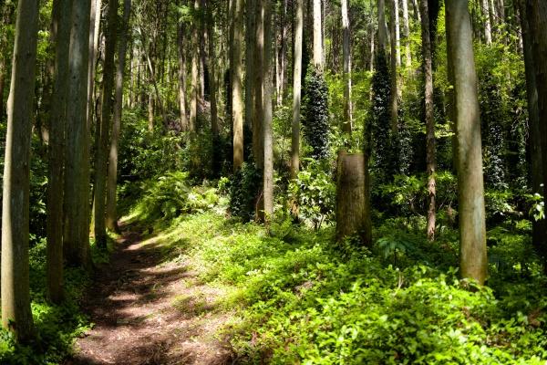 良い雰囲気の林