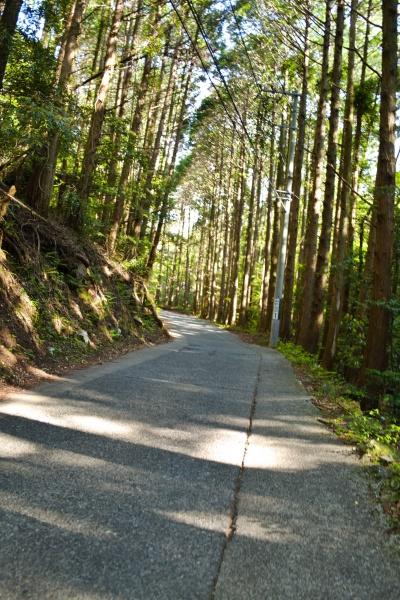 歩きやすい細野高原への道。