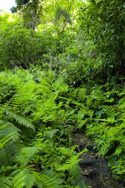 ジャングルっぽい下山道