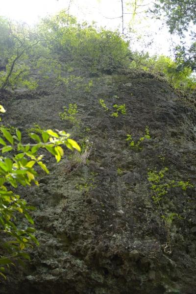 洞窟の上を見上げる