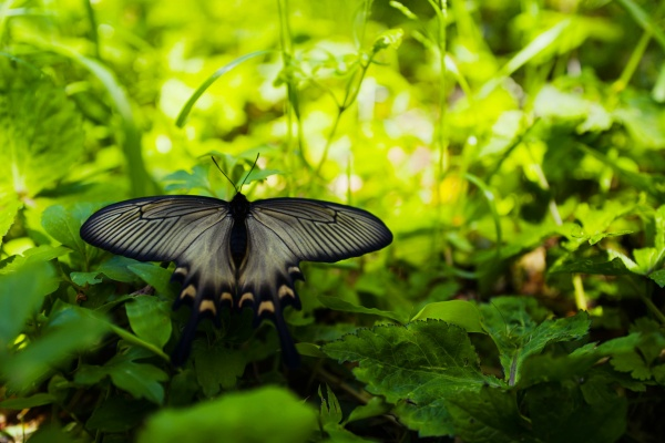 きれいな蝶がいた。