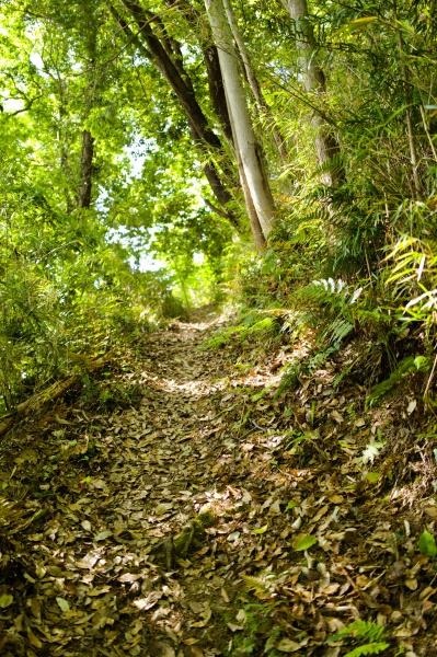 竹林の登山道。