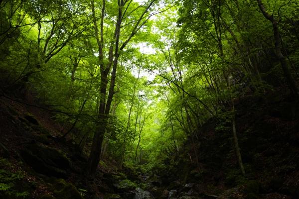 深い森林をハイキング。