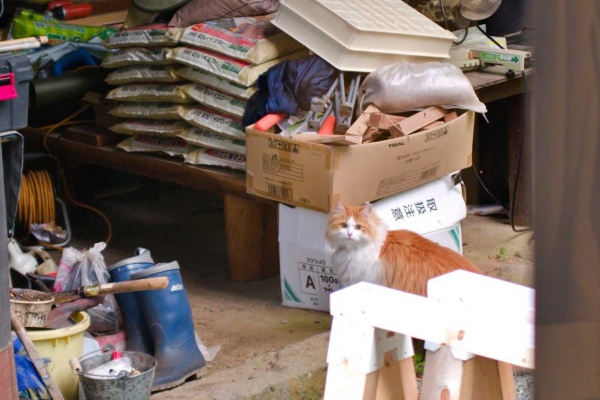 猫と目が合う。おはよう。