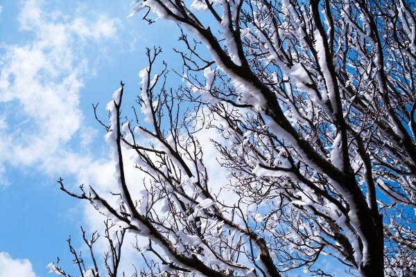 5月の九州で樹氷が見れるとは