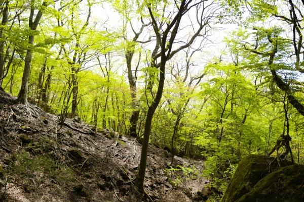 遭難注意の森です。
