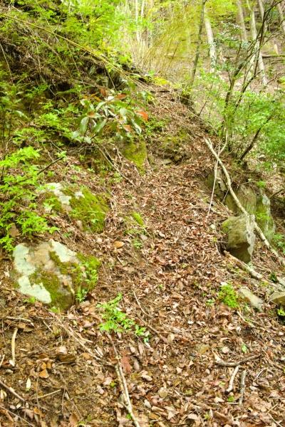 旧登山口は歩きにくそう。