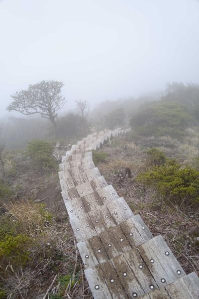 トコトコと木製の階段を下る。