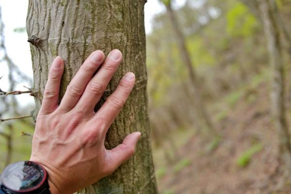 木に触れるとじっとりと湿っている。
