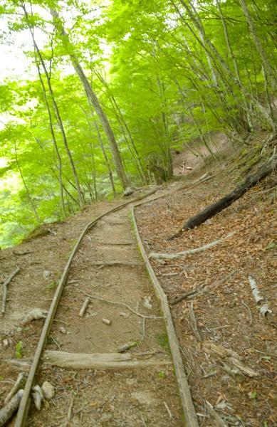 登山道にレールがあって不思議。