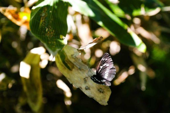 蝶々も一休み。