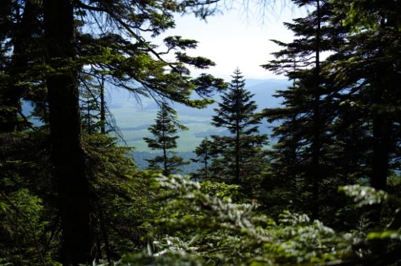 林の隙間から尾瀬沼がちらり。山頂から見たかったな…
