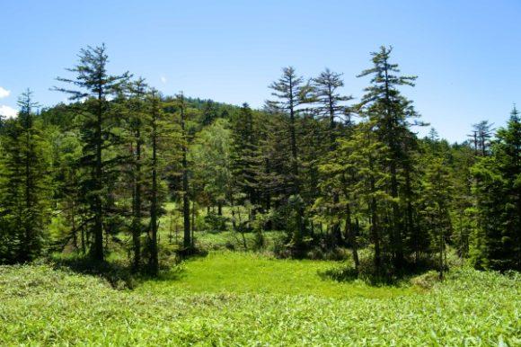 絵になる尾瀬の森林