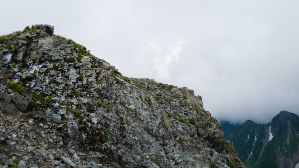 この岩陰に雷鳥がいました。