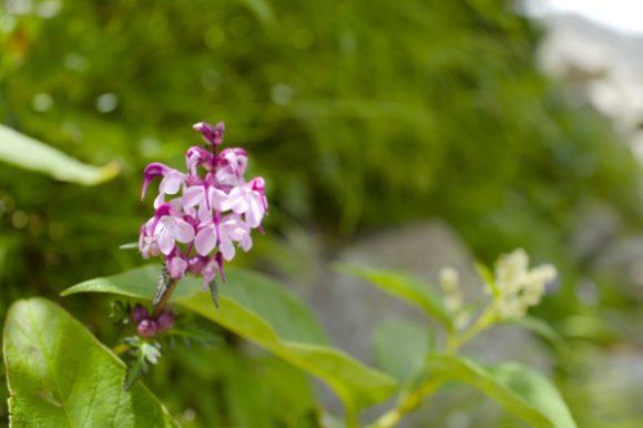 ピンクのかわいい花
