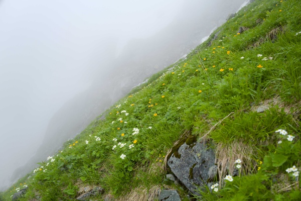 斜面に花が咲く。